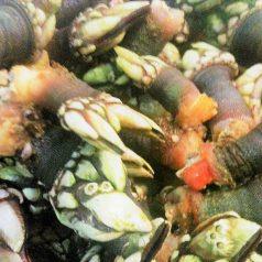 Restaurante Marisquería Hórreo (Porto do Son). La importancia de llamarse Ernesto, del tamaño del percebe y del punto de la carne
