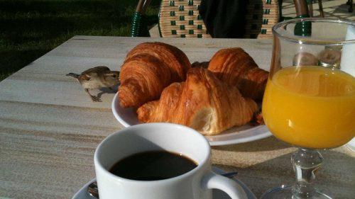 Desayuno en Olon Sainte-Marie (foto: Cuchillo)