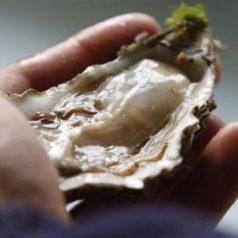 De ostras y otros moluscos. A casa por Navidad