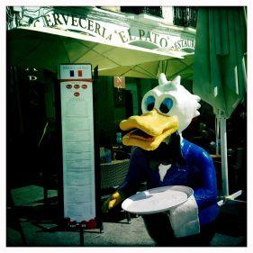 Imagen del ánade-camarero que recibe en El Pato (foto: cuchillo)