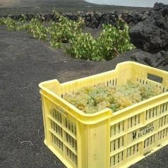 Mueble bar: El Grifo, el vino que escupió el volcán