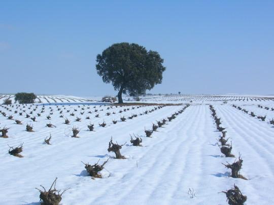 Precioso, el viñedo nevado en la Ruta del Vino de Rueda.