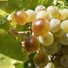 Ruta del Vino de Rueda. Recorrido por la cultura del vino