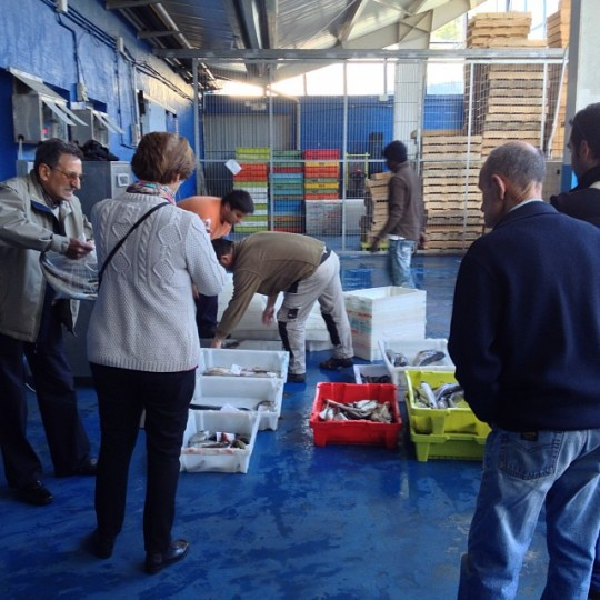Hoy ha entrado en la #rula de #luarca #xaragu #lubina #parrocha #bugre #pixin #asturias #port #sea