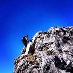 dicky climbing