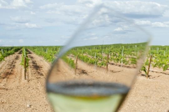 Un vistazo a los viñedos de Bodega Montepedroso (foto: Miguel Ángel Muñoz Romero)