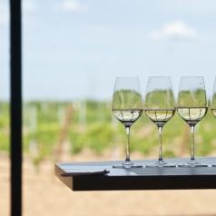 Ruta del vino de Rueda. Los dominios de la uva verdejo