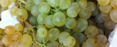 Doce uvas de la suerte