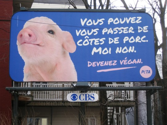 Peta _ Quebec_Pork_Billboard__1417539186_24.171.149.195