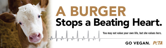 burgercowBB
