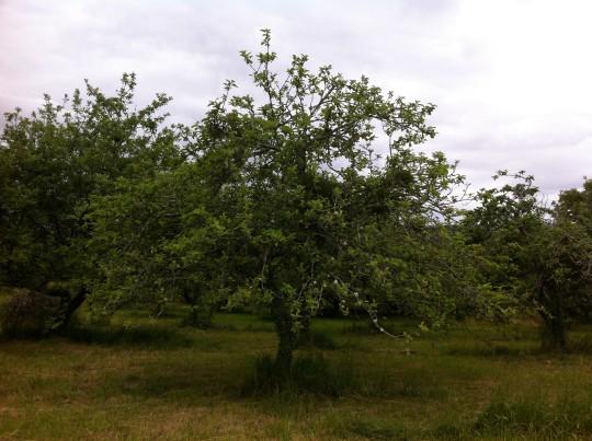 Una vista del manzanal Etxeburua, la pasada primavera (foto: Cuchillo)