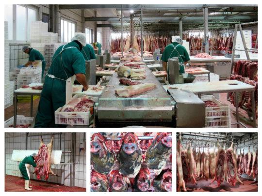 Distintas fases del despiece del cerdo en Montaraz (foto: Cuchillo)