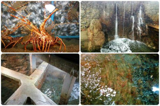 Cuatro imágenes de los viveros de langosta de Astuy (fotos: Cuchillo)