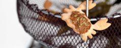 Buscando cangrejos, por Elena Arzak (Recetas para una cuarentena #53)