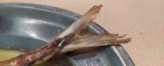 Ibaiondo (Maruri-Jatabe). Popular, sencillo y satisfactorio