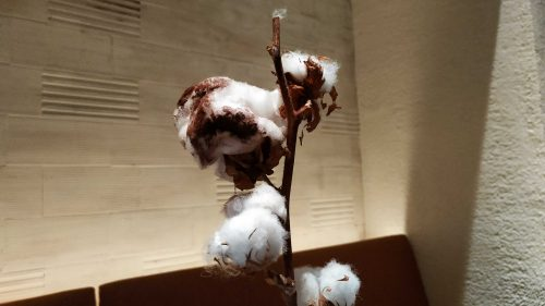 Algodón de cacao y menta, en Disfrutar (foto: Cuchillo)
